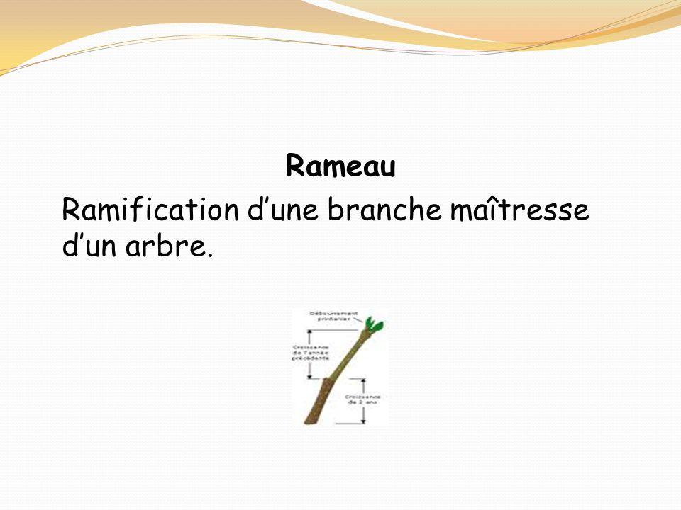 Rameau Ramification d'une branche maîtresse d'un arbre.