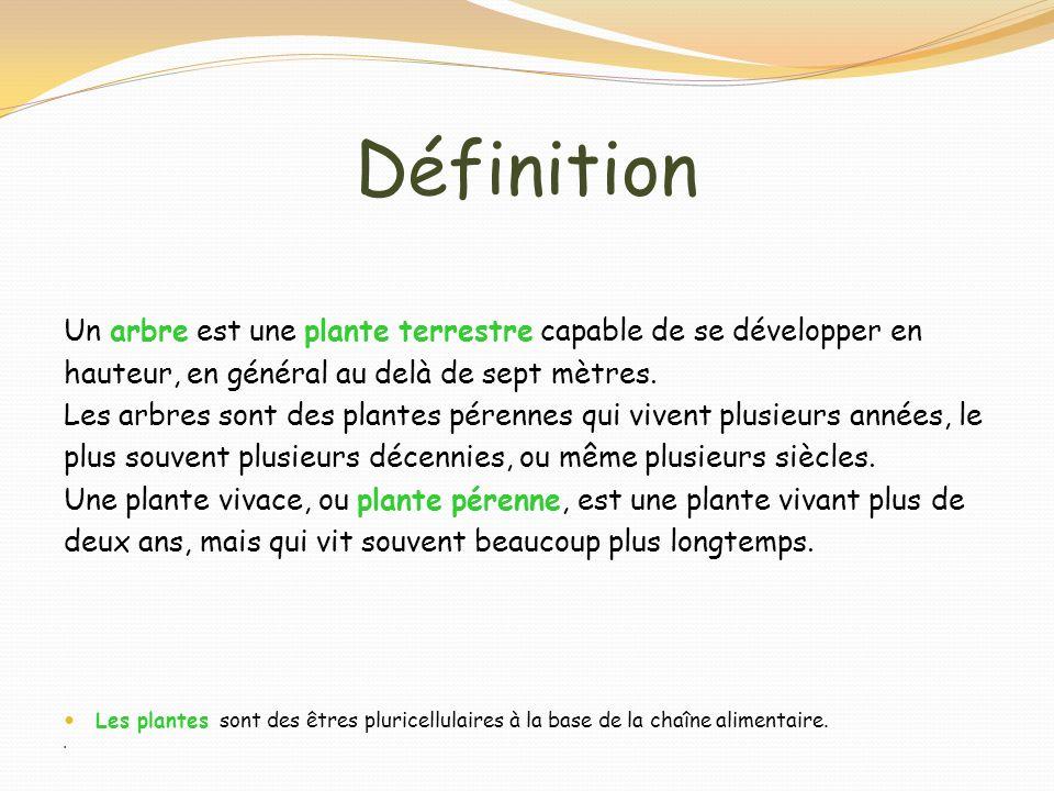 Définition Un arbre est une plante terrestre capable de se développer en. hauteur, en général au delà de sept mètres.