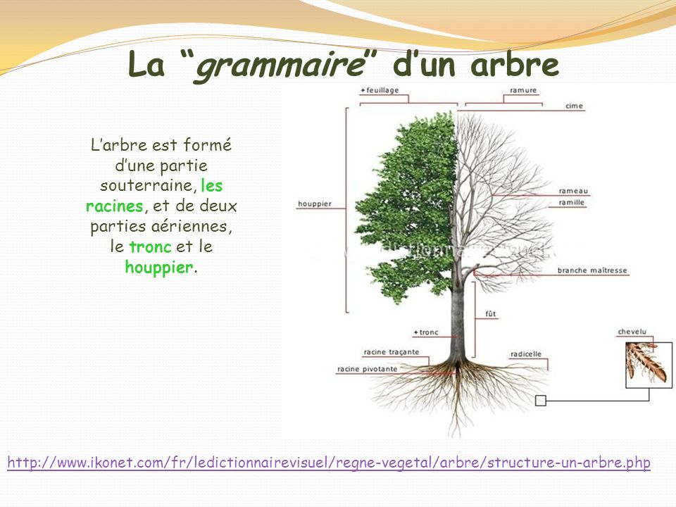 La grammaire d'un arbre