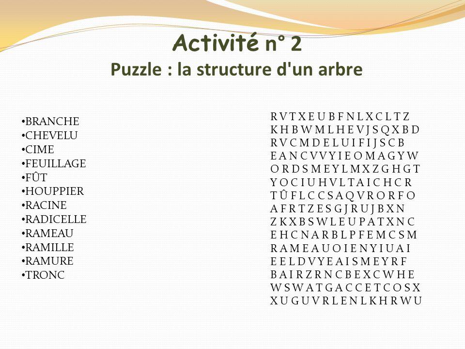 Activité n° 2 Puzzle : la structure d un arbre