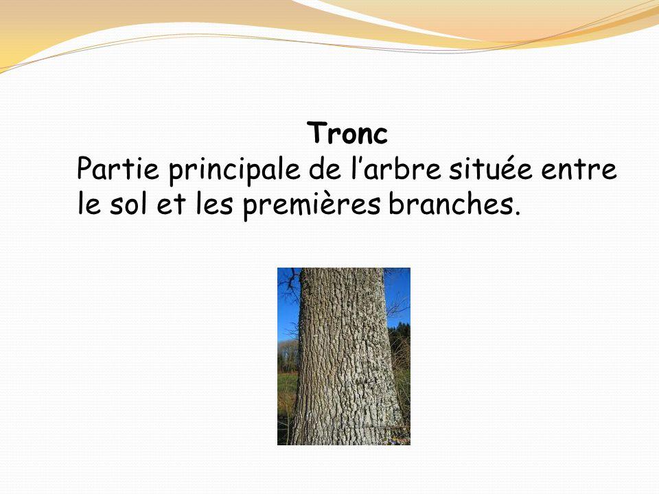 Tronc Partie principale de l'arbre située entre le sol et les premières branches.