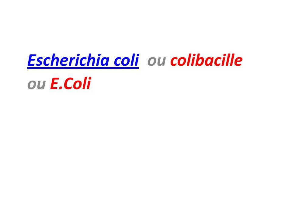 Escherichia coli ou colibacille