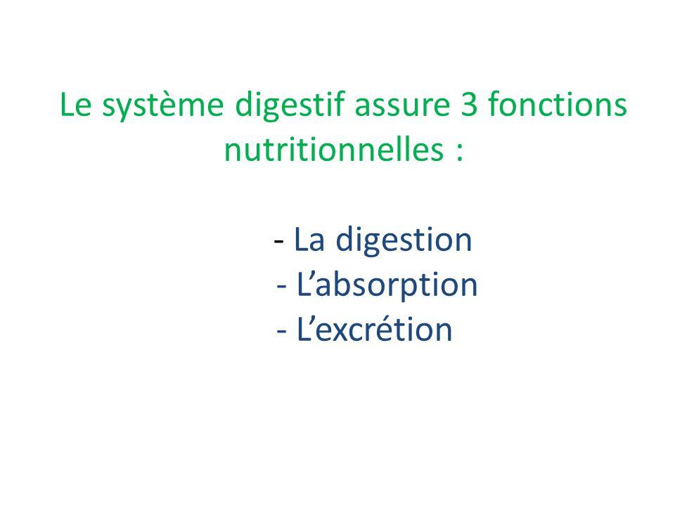 Le système digestif assure 3 fonctions nutritionnelles : - La digestion - L'absorption - L'excrétion