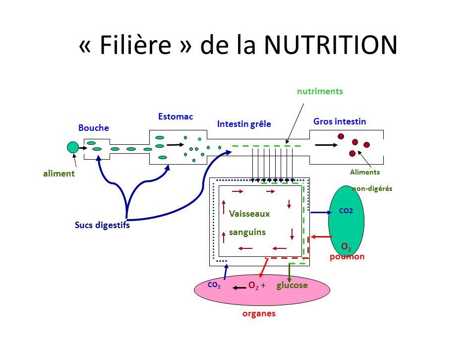 « Filière » de la NUTRITION