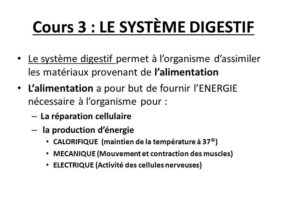 Cours 3 : LE SYSTÈME DIGESTIF