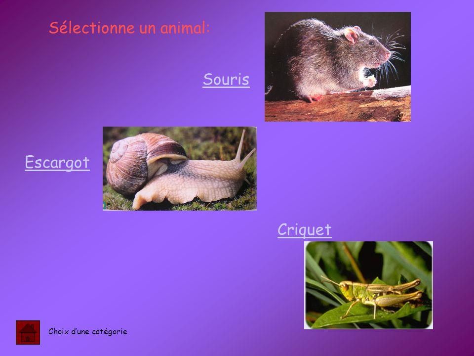 Sélectionne un animal: