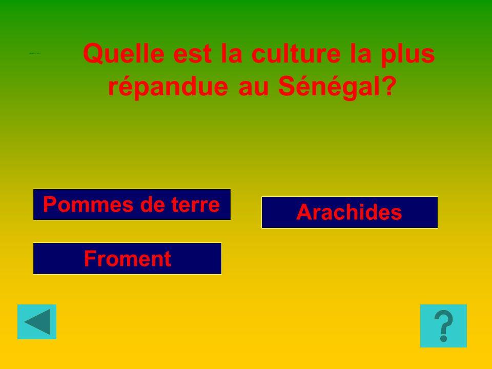 Quelle est la culture la plus répandue au Sénégal