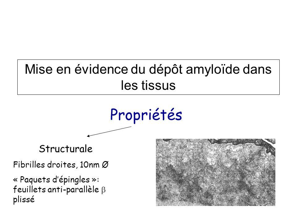 Mise en évidence du dépôt amyloïde dans les tissus