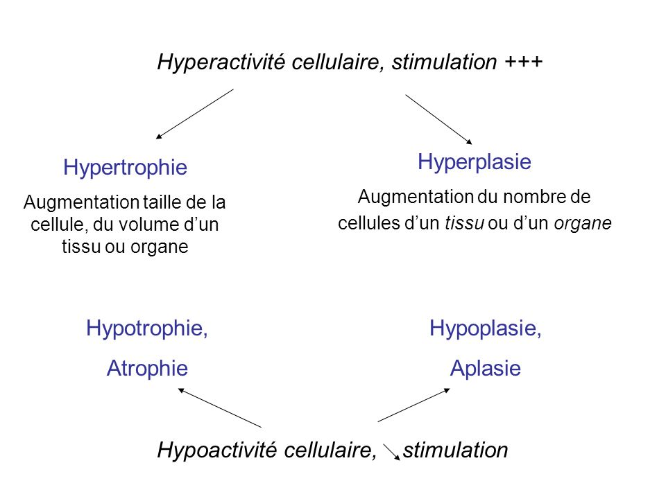 Hyperactivité cellulaire, stimulation +++