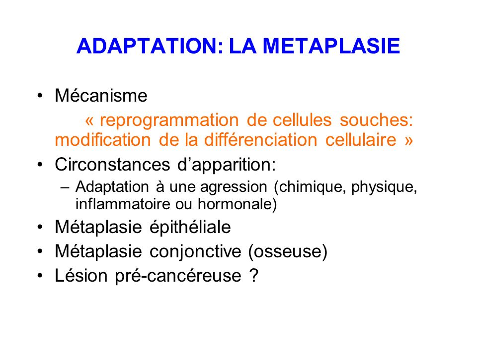 ADAPTATION: LA METAPLASIE