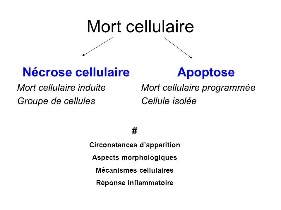 Mort cellulaire Nécrose cellulaire Apoptose Mort cellulaire induite