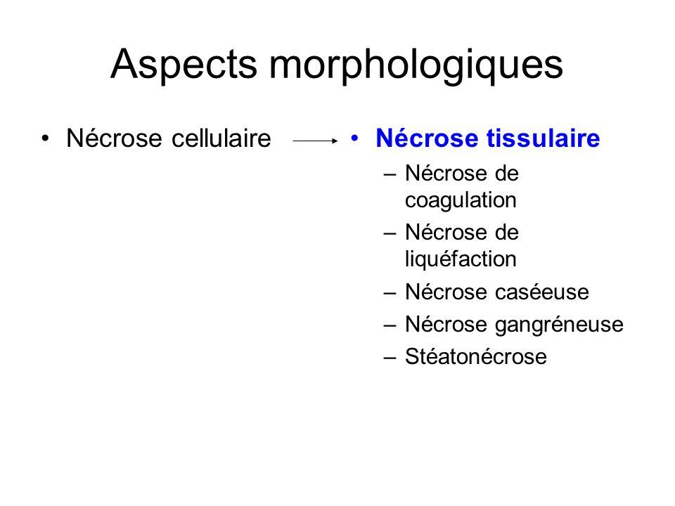 Aspects morphologiques