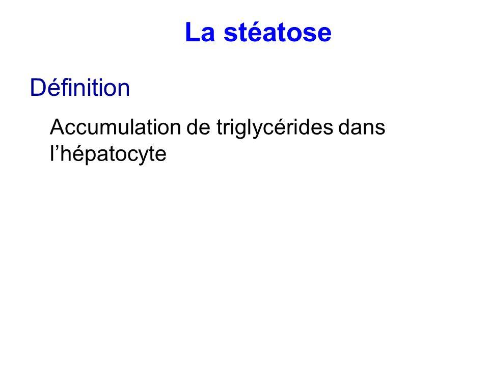 La stéatose Définition Accumulation de triglycérides dans l'hépatocyte