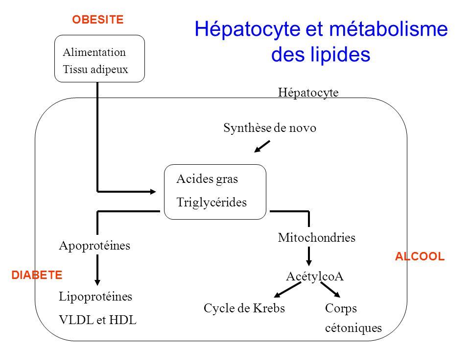 Hépatocyte et métabolisme des lipides
