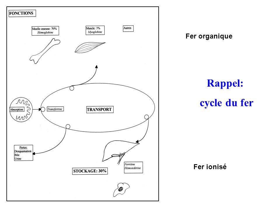 Fer organique Rappel: cycle du fer Fer ionisé