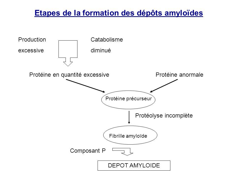 Etapes de la formation des dépôts amyloïdes