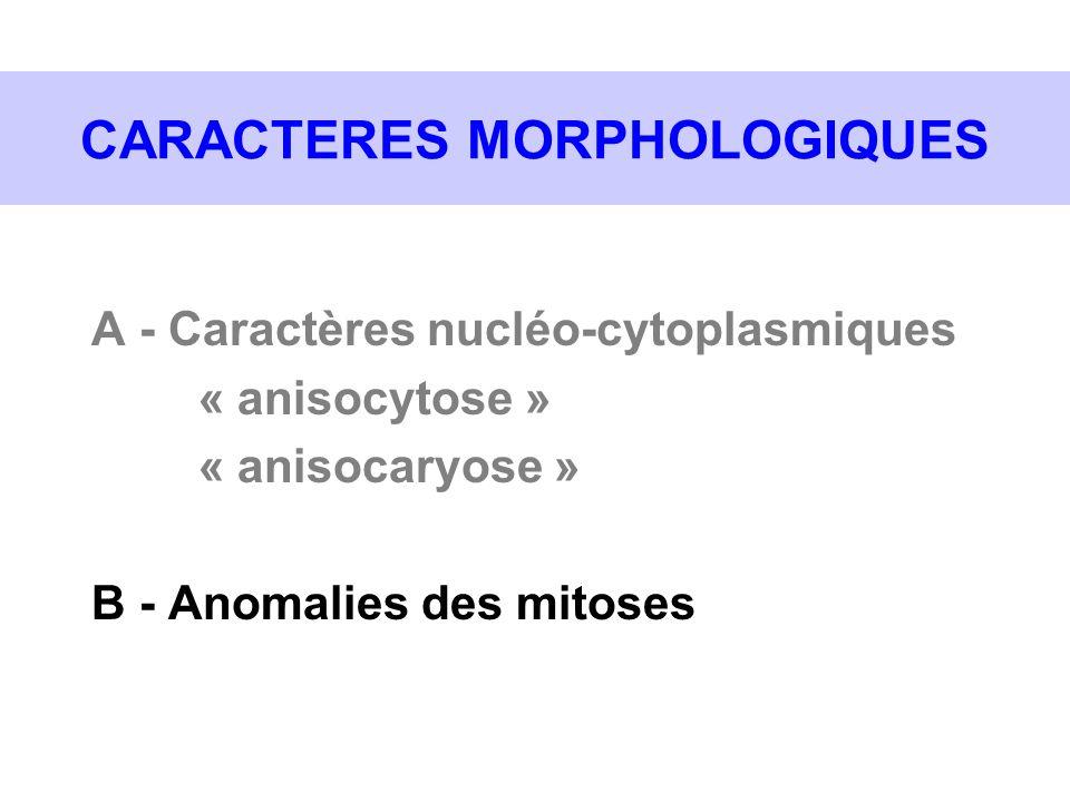 CARACTERES MORPHOLOGIQUES