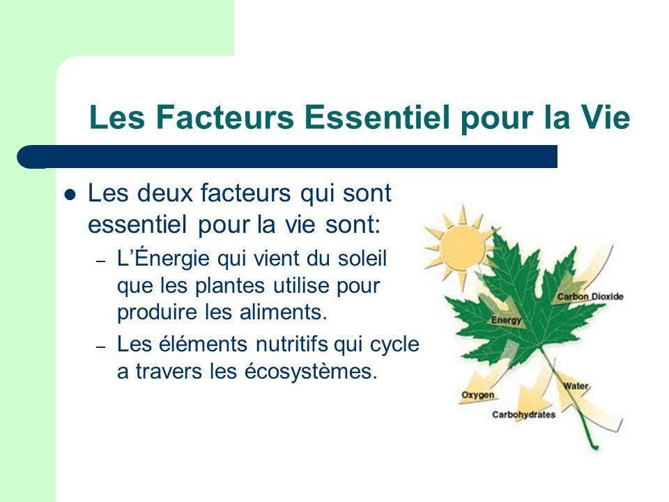 cycles de nutriments environment abiotique dechets d animaux ppt t l charger. Black Bedroom Furniture Sets. Home Design Ideas