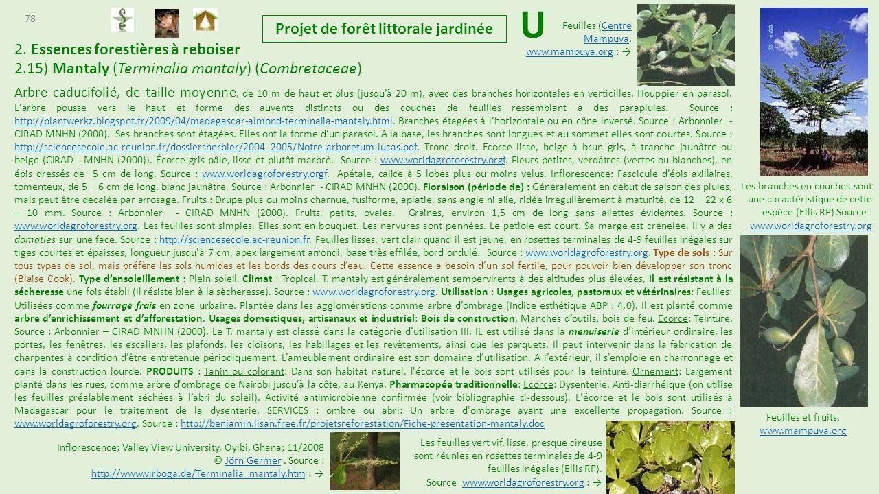 Projet de cr ation de for t littorale tropicale jardin e - Utilisation de la sciure de bois au jardin ...
