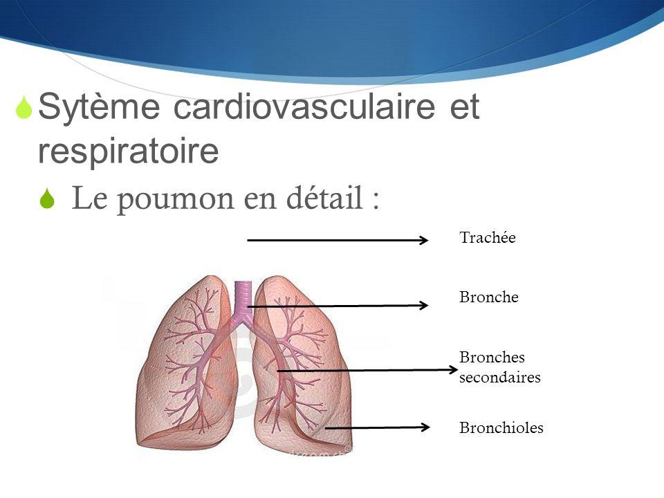 Sytème cardiovasculaire et respiratoire