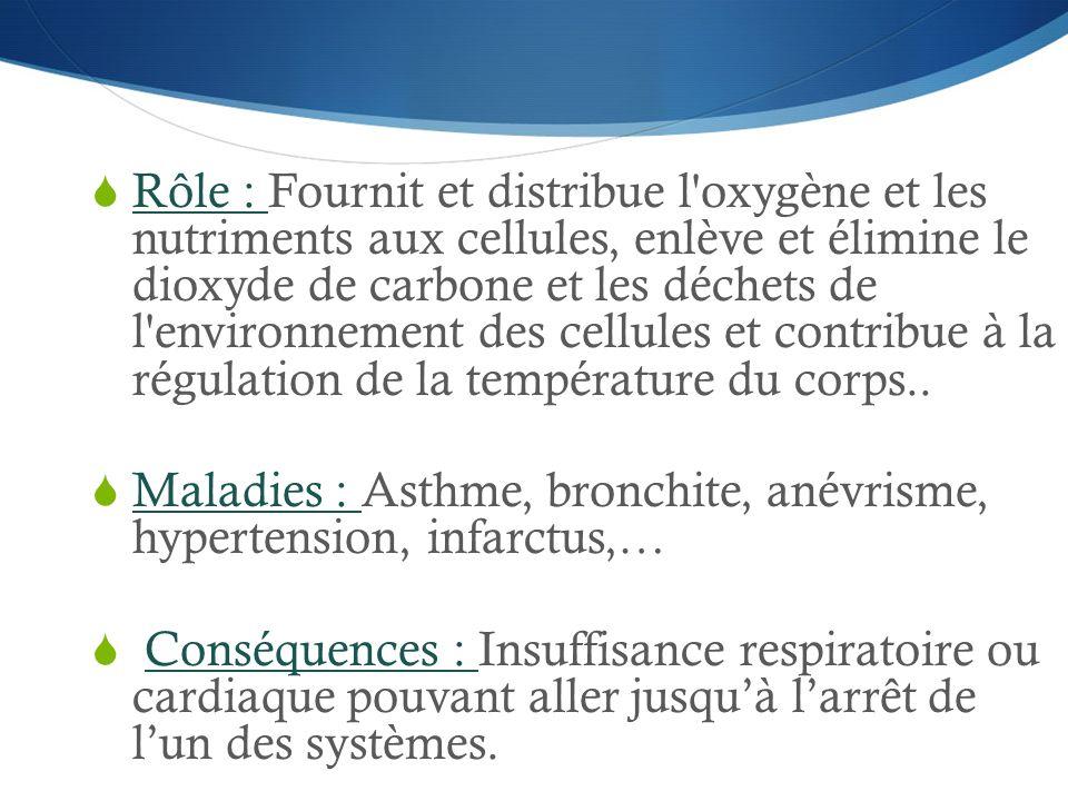 Rôle : Fournit et distribue l oxygène et les nutriments aux cellules, enlève et élimine le dioxyde de carbone et les déchets de l environnement des cellules et contribue à la régulation de la température du corps..