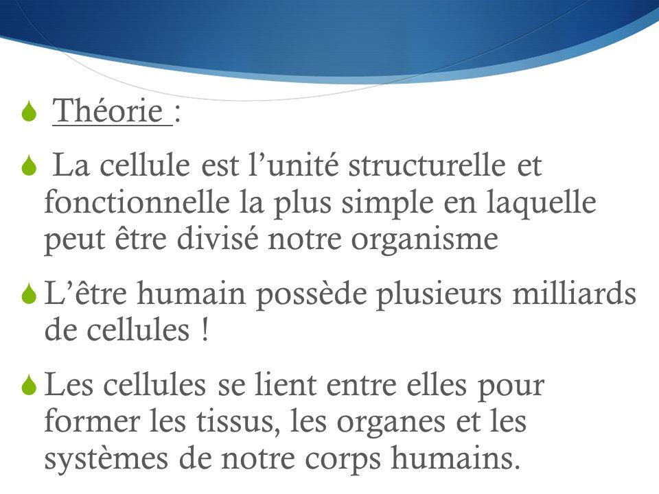 Théorie : La cellule est l'unité structurelle et fonctionnelle la plus simple en laquelle peut être divisé notre organisme.