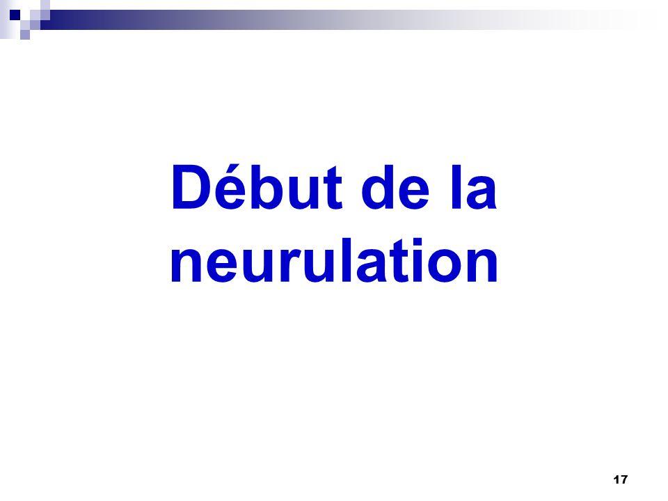 Début de la neurulation