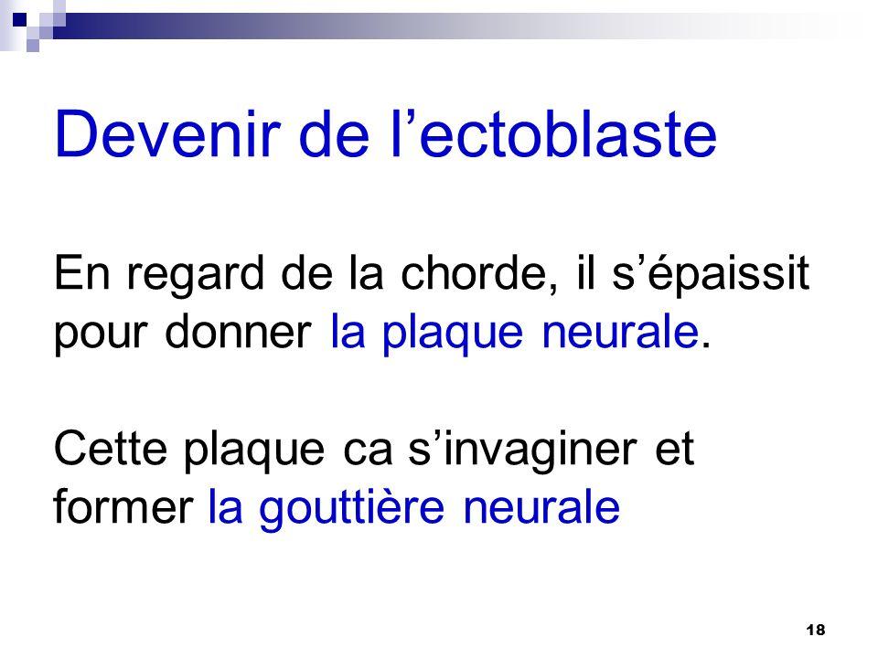 Devenir de l'ectoblaste En regard de la chorde, il s'épaissit pour donner la plaque neurale.