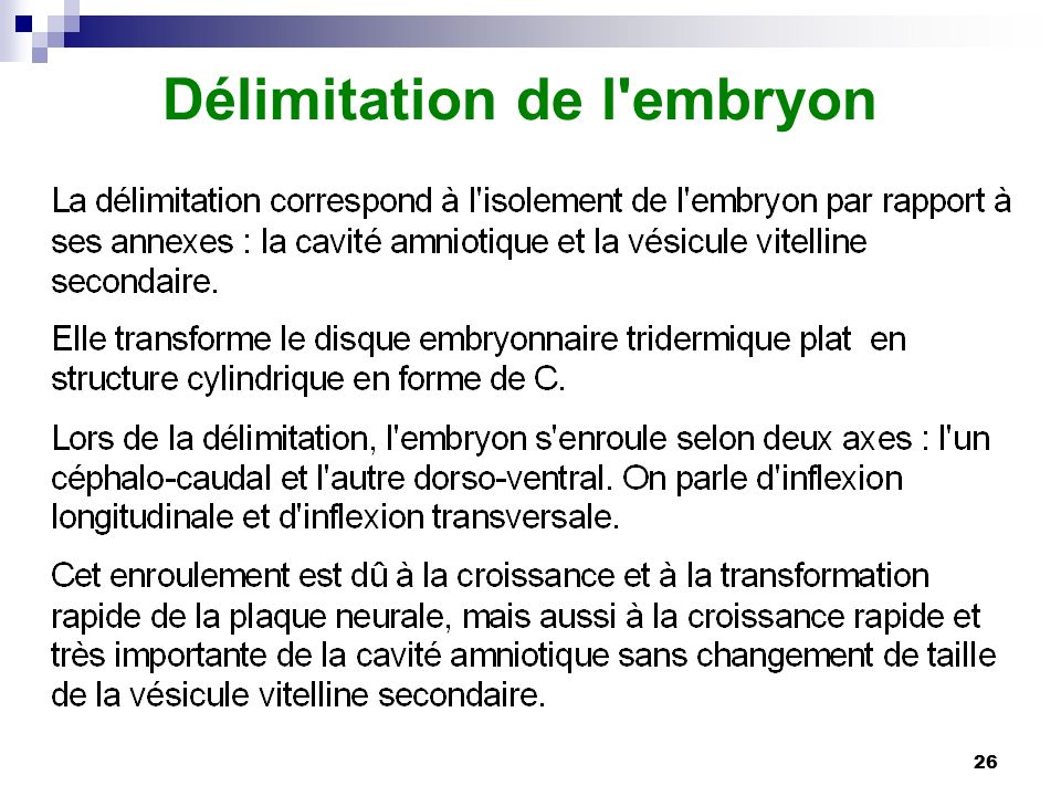 Délimitation de l embryon