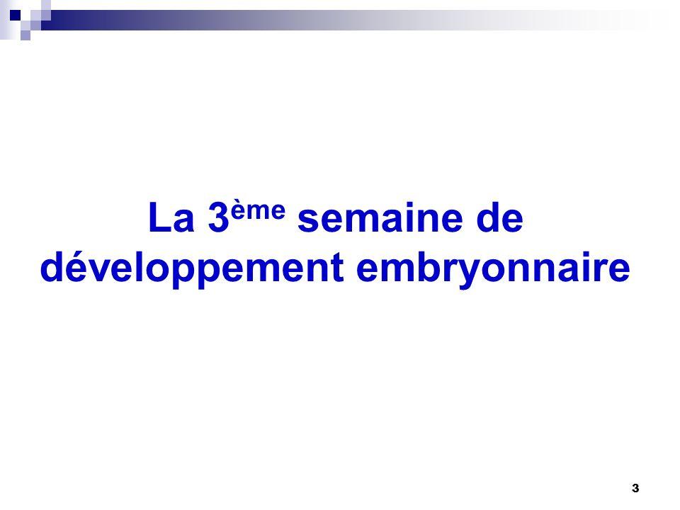 La 3ème semaine de développement embryonnaire