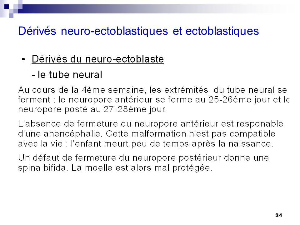 Dérivés neuro-ectoblastiques et ectoblastiques