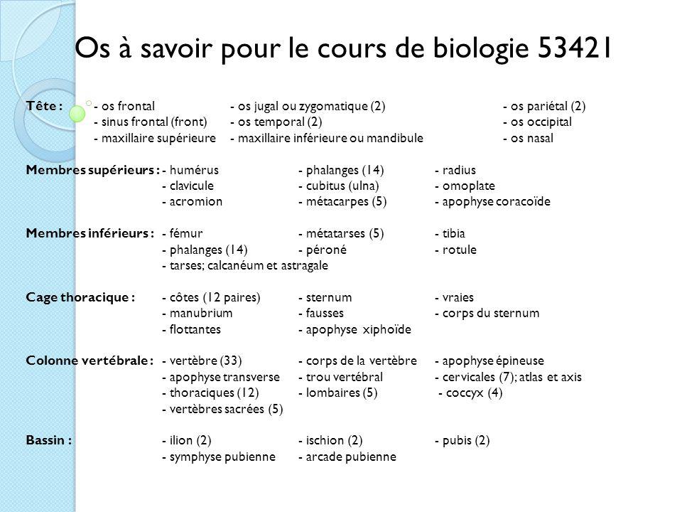 Os à savoir pour le cours de biologie 53421