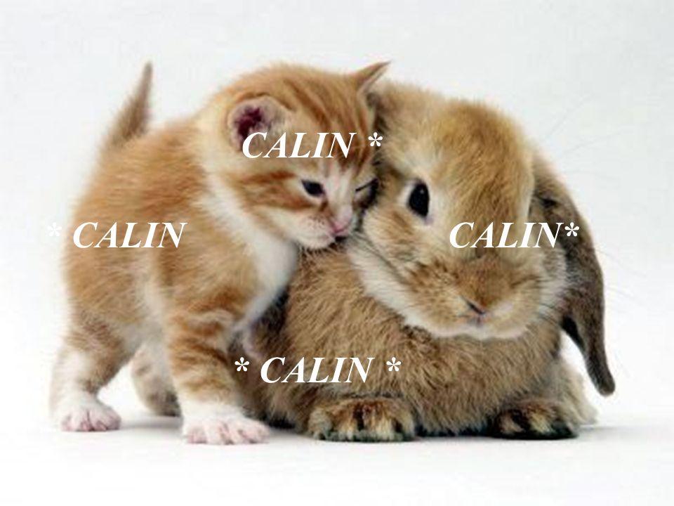 CALIN+%2A+%2A+CALIN+CALIN%2A+%2A+CALIN+%2A