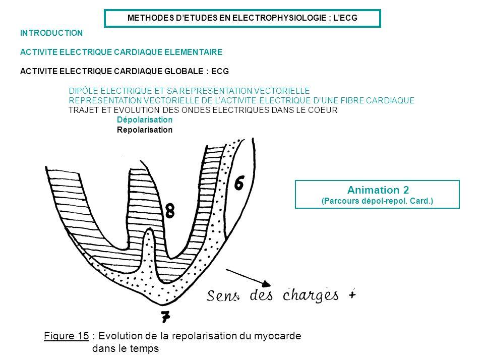 Figure 15 : Evolution de la repolarisation du myocarde dans le temps
