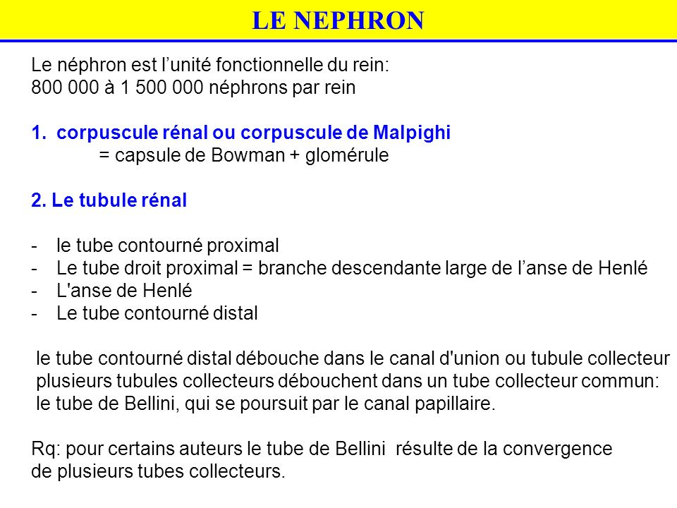 LE NEPHRON Le néphron est l'unité fonctionnelle du rein: