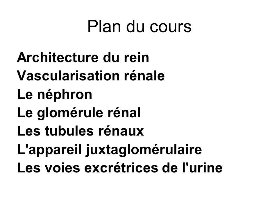 Plan du cours Architecture du rein Vascularisation rénale Le néphron
