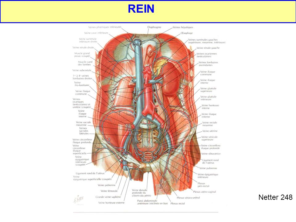 REIN Netter 248