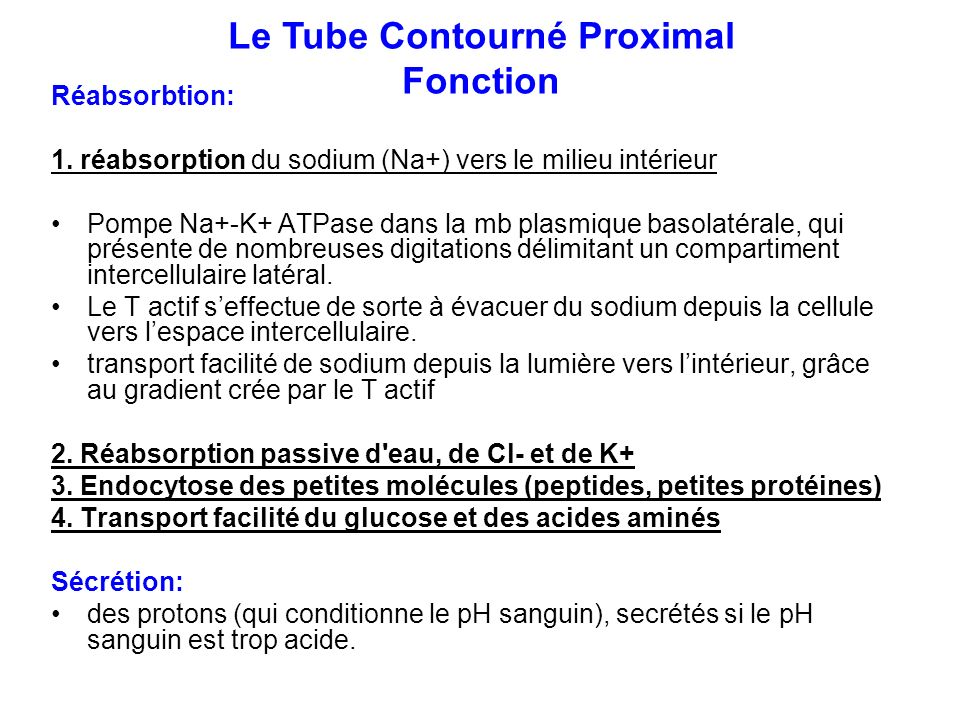Le Tube Contourné Proximal Fonction