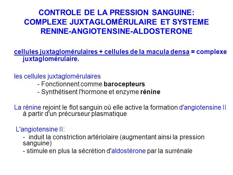 CONTROLE DE LA PRESSION SANGUINE: COMPLEXE JUXTAGLOMÉRULAIRE ET SYSTEME RENINE-ANGIOTENSINE-ALDOSTERONE