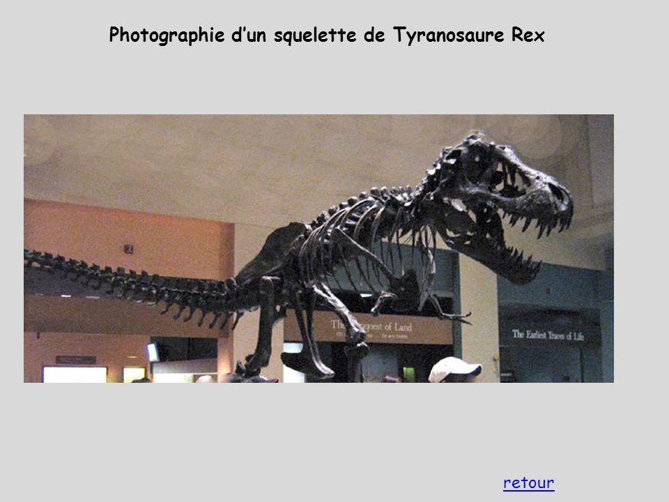 Photographie d'un squelette de Tyranosaure Rex