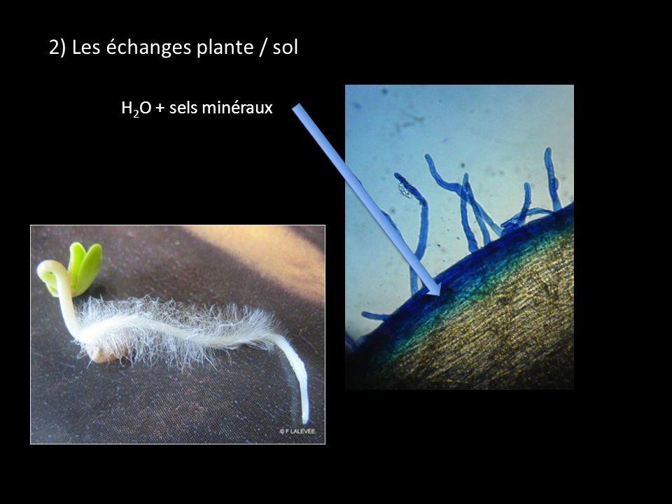 2) Les échanges plante / sol