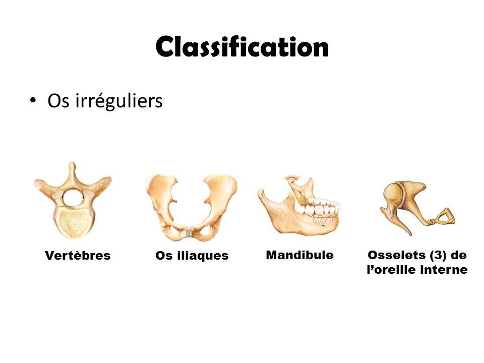 Osselets (3) de l'oreille interne