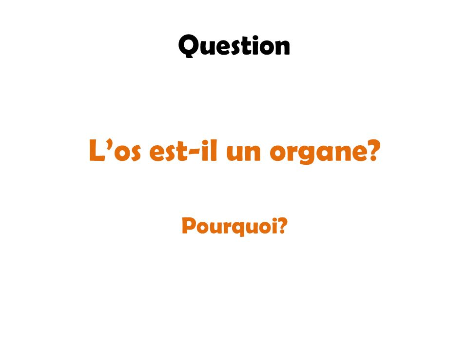L'os est-il un organe Question Pourquoi