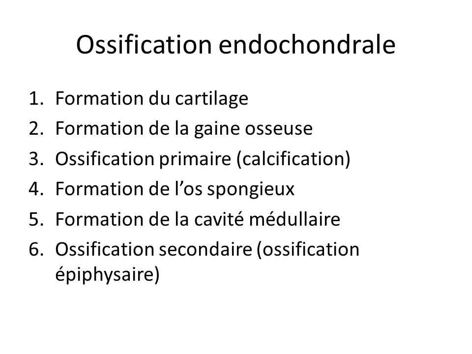 Ossification endochondrale