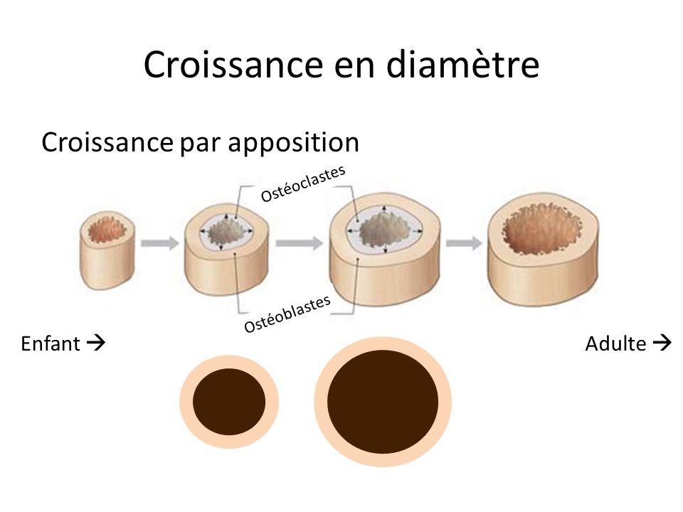 Croissance en diamètre