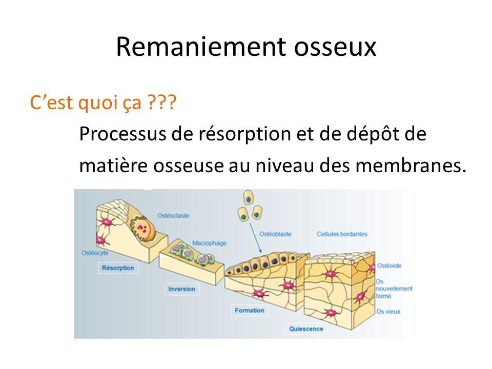 Remaniement osseux C'est quoi ça Processus de résorption et de dépôt de matière osseuse au niveau des membranes.
