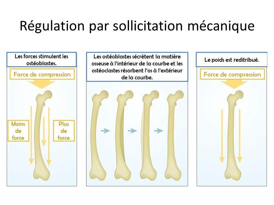 Régulation par sollicitation mécanique