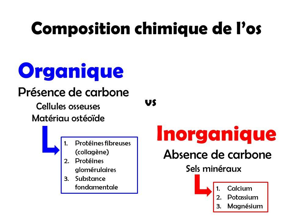 Composition chimique de l'os
