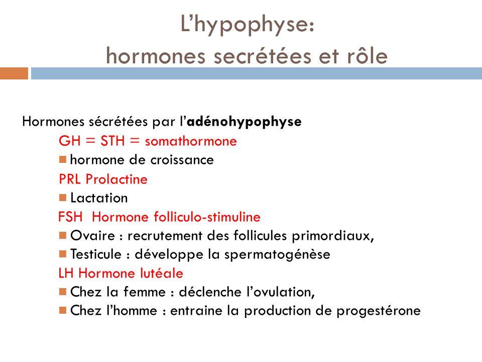 L'hypophyse: hormones secrétées et rôle
