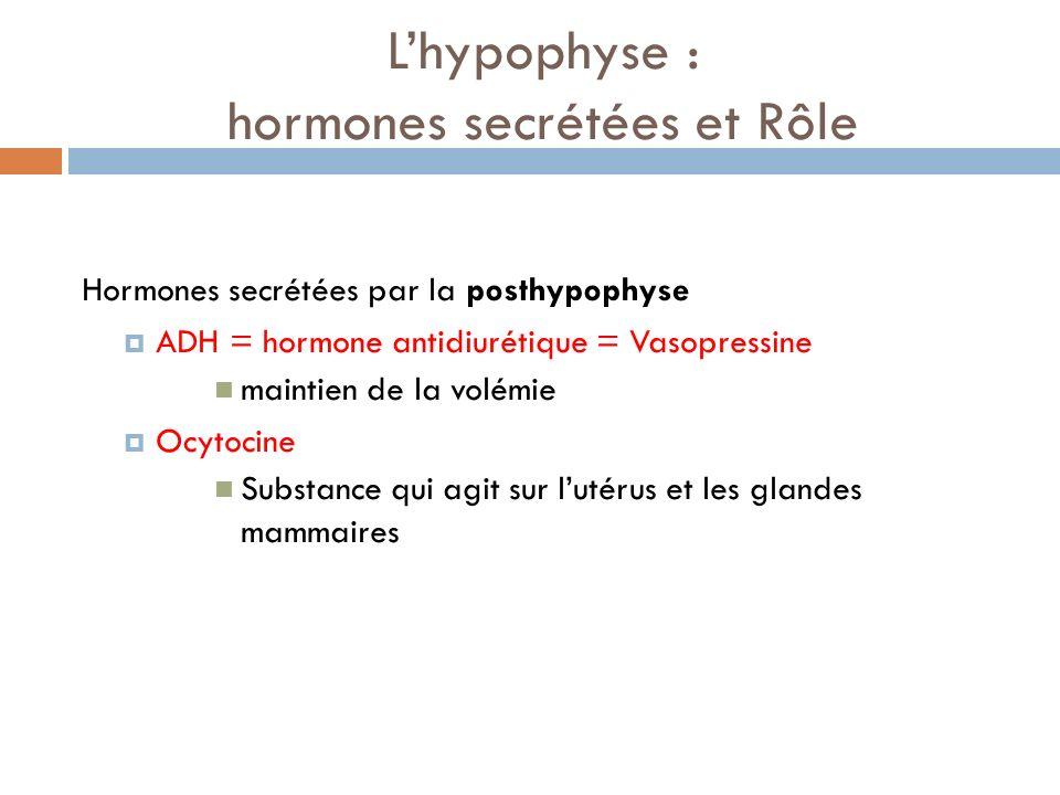 L'hypophyse : hormones secrétées et Rôle